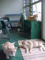 Cats sunning in front  porch.