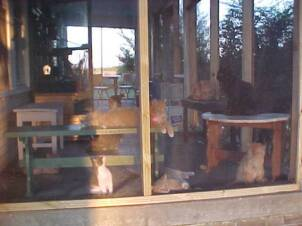 Cats enjoying NEW screened in porch donated & build by Jim Gehringer & Chuck O'Kelly.  OH PURR!